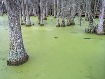 South Carolina Swamp Stock Photo