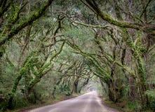 South Carolina väg nära charleston och botanikfjärden blickar som ett fönster in i djungeln arkivfoton