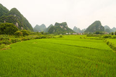 South china rice field and limestones Stock Photography