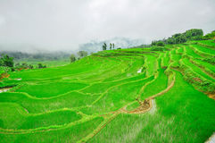 South China, Yunnan - 2011: Rice terraces Royalty Free Stock Photography