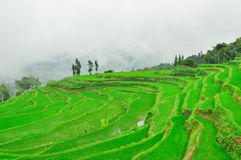 South China, Yunnan - 2011: Rice terraces. In highlands of southeastern China, farmhouses, ethnic village. Rice terraces rice paddies Asia, peasant village in Royalty Free Stock Images