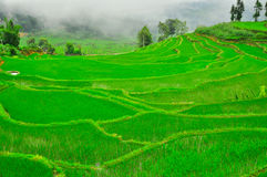 South China, Yunnan - 2011: Rice terraces Royalty Free Stock Photos