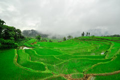 South China, Yunnan - 2011: Rice terraces. In highlands of southeastern China, farmhouses, ethnic village. Rice terraces rice paddies Asia, peasant village in Royalty Free Stock Photos