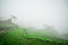 South China, Yunnan - 2011: Rice terraces Stock Photography
