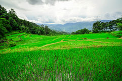 South China, Yunnan - 2011: Rice terraces. In highlands of southeastern China, farmhouses, ethnic village. Rice terraces rice paddies Asia, peasant village in Royalty Free Stock Photo