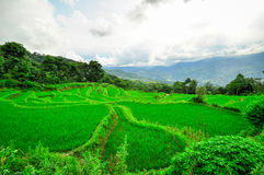 South China, Yunnan - 2011: Rice terraces Stock Image