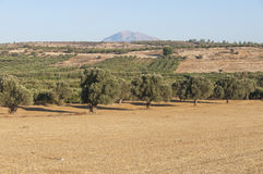 South Crete near Matala Stock Images