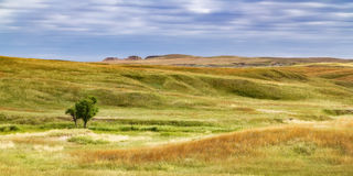South Dakota Grassland. Taken in the Buffalo Gap National Grassland near the Badlands of South Dakota Royalty Free Stock Photo