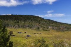 South Dakota Ranch - 2. A ranch in the Black Hills of South Dakota Royalty Free Stock Photos