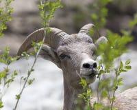 South- DakotaGrasland Stockfotos