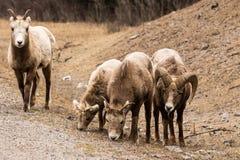 South- DakotaGrasland Stockfoto