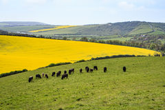 The South Downs, East Sussex, England, Great Britain. The scenery of the South Downs of England on the way to the Long Man of Wilmington stock photography