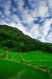 South east China, Yunan Rice terraces highlands Royalty Free Stock Image
