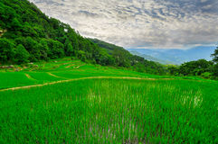 South east China, Yunan Rice terraces highlands Royalty Free Stock Images