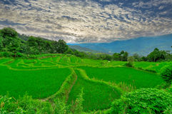 South east China, Yunan Rice terraces highlands Royalty Free Stock Photography