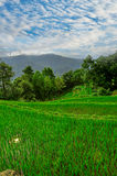 South east China, Yunan Rice terraces highlands Stock Photography
