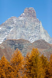 The south face of the Matterhorn view through a frame of larch t Royalty Free Stock Photos
