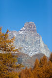 The south face of the Matterhorn view through a frame of larch t Stock Photo