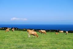 South Farm. Cow farm on the South of England Stock Photos