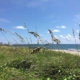 South Florida beach. Sand dune view to Stock Photos