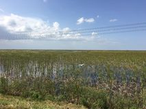 South Florida Everglades. Marsh land Royalty Free Stock Photo
