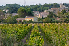 South France vineyards Royalty Free Stock Image