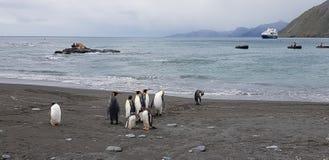 South Georgia 2018. South Georgia penguins travel paradise expedition wild nature wild animals stock images