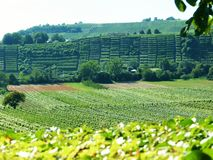 South German landscape with fields and vineyard in the background. Hilly landscape with lots of greenery, area with intensive agriculture, wine growing in steep royalty free stock images