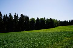 Meadow with forest and blue sky three layers of summer royalty free stock images