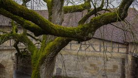 Moss covered tree in front of ancient town hall stock photo