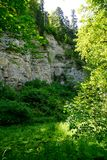 Rocky ravine in black forest with a lot of plants royalty free stock images