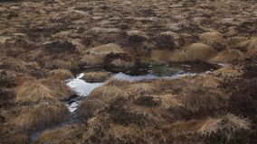 Turf in moor with water pond stock images