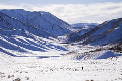 South Island Landscape, New Zealand. Man walking his dog amongst snow covered a South Island Landscape, Canterbury, New Zealand Royalty Free Stock Image