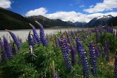 South Island Springtime Royalty Free Stock Image
