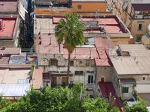Naples 006. South Italy town. Panoramic view of Naples. Cities roofs and ornamental plants Stock Photography