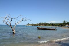 South Jamaica Travel. A boat and tree are seen from the shore in Treasure Beach, Jamaica Stock Photography