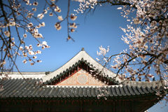 Jagyeongjeon Emperor palace South Korea. Stock Photography