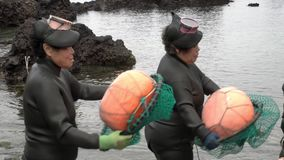 South Korea - May 19, 2018: Traditional Women-Divers at Jeju Island, also Called as Haenyeo, Perform Symbolic Dance and. Song Before Gathering Shell-Fish in the stock video