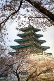 South Korea National Folk Museum. With cherry blossom, Seoul Stock Image