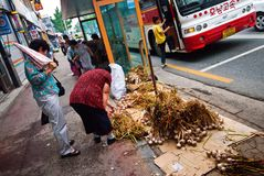 South Korea, vegetable street seller stock images