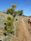 South Mesa Trailhead Colorado. A tall wooden bush growing along the uphill trail Stock Photo