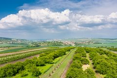 South Moravia, Czech republic: Vineyard fields on agriculture land. Countryside meadow, vineyard plant and beautiful landscape nea. R small village. Summer and royalty free stock photo