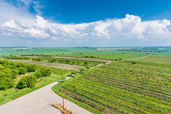 South Moravia, Czech republic: Vineyard fields on agriculture land. Countryside meadow, vineyard plant and beautiful landscape nea. R small village. Summer and royalty free stock photos