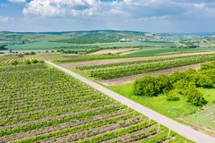South Moravia, Czech republic: Vineyard fields on agriculture land. Countryside meadow, vineyard plant and beautiful landscape nea. R small village. Summer and stock photography