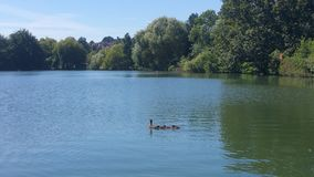 South Norwood Lake Royalty Free Stock Photo