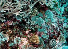 South Pacific Coral Colony Detail stock photo
