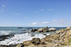 South Pacific hav, Dunedin, New Zealand Fotografering för Bildbyråer