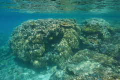 South Pacific ocean shallow underwater coral reef royalty free stock image