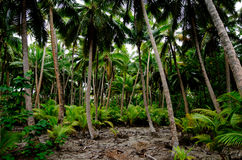 South Pacific Rain Forest Jungle Royalty Free Stock Photography