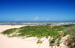 South Padre Island beach scene. South Padre Island beach with many happy beach-goers. Vines cover the dunes royalty free stock images
